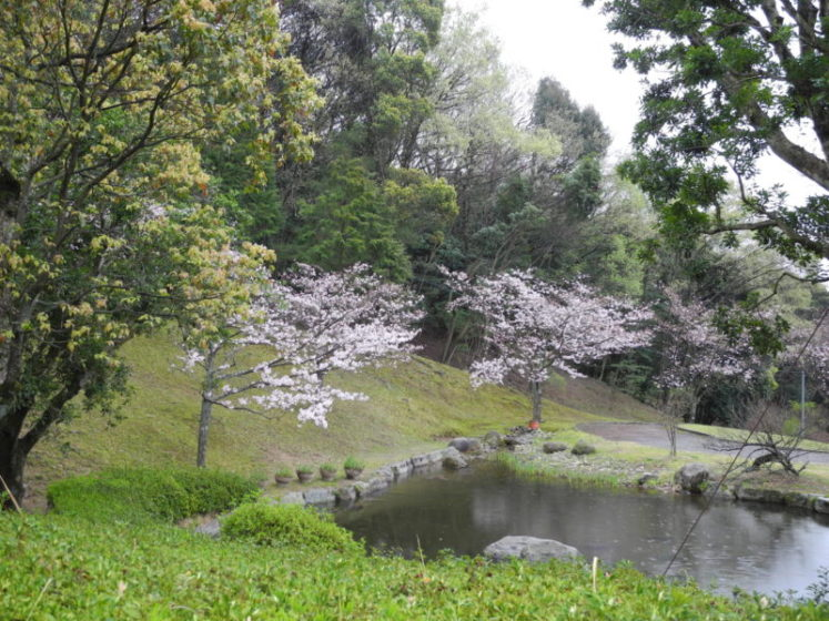 桜開花3月30日